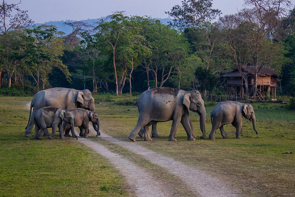 Kaziranga – March 2020 – Tour Report